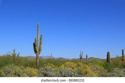 Saguaro Cactus with wild flowers in the Arizona desert