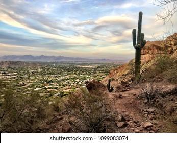 Saguaro at Camelback Mountain