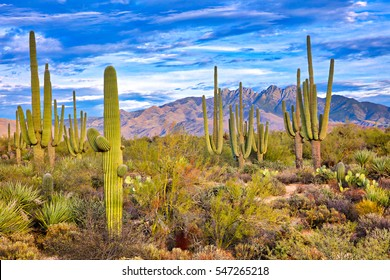 Saguaro and Four Peaks near Phoenix, Arizona.