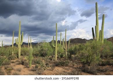 Saguaro National Park in Arizona, USA, west unit