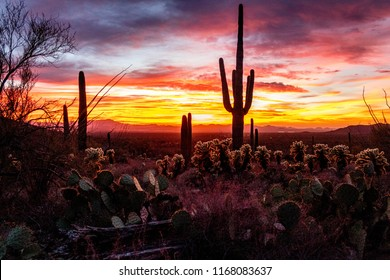 Saguaro National Park West, Tucson Arizona Sunset.