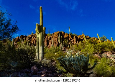 Saguaro National Park west of Tucson, Arizona. Beautiful Sonoran Desert landscape in winter. Rocks, teddy bear cholla cactus, a cacti covered hillside and stone cliffs under a blue sky. 2018.