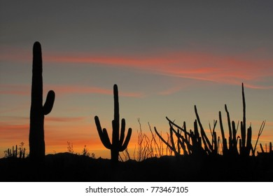 Saguaro, Organ Pipe and Ocotillo cactuses at sunset in Organ Pipe Cactus National Monument, Ajo, Arizona, USA