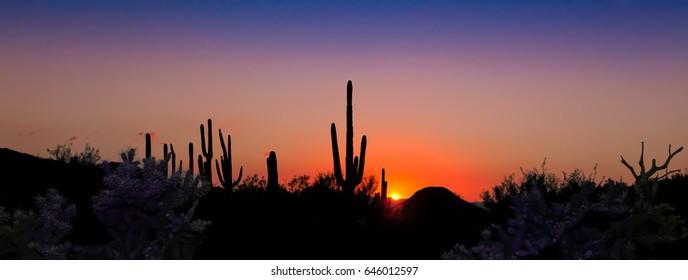 Saguaro Panorama Sunset Silhouette