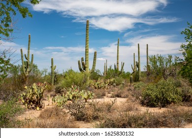 Saguaro Park is home to the nation's largest cacti. The giant saguaro is the universal symbol of the American west.