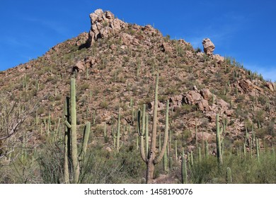 Saguaro, Prickly Pear, Ocotillo and Palo Verde on a rocky mountainside at Sus Picnic Area in Saguaro National Park, West, Arizona, USA