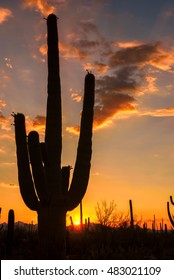 Saguaro Silhouette at Colorful Sunset in Desert, Vertical