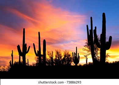 Saguaro silhouette in fiery Sonoran Desert sunset lit sky.