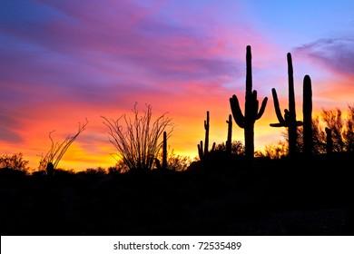 Saguaro silhouetten in fiery Sonoran Desert sunset lit sky.