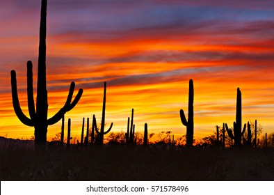 Saguaro silhouetting against red sky at sunset.