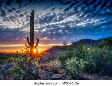 Saguaro at sunset in the Sonoran desert in Scottsdale, Arizona. Dramatic cloudscape captured with 5 image HDR photo.
