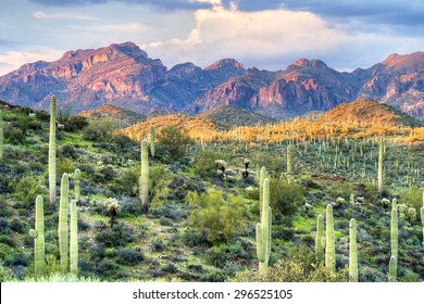 Saguaros in Sonoran Desert, with beautifull mountains as background.