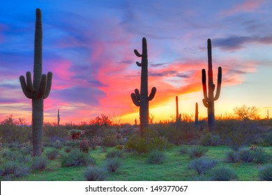 Saguaros at sunset, with blood red sky.