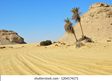 Sahara desert and palm trees against blue sky. Western desert, Ain el-Maqfi, Ain Abu Hawas. Egypt. Africa