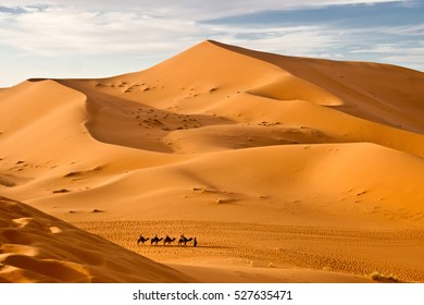 Sahara desert up view with the silhouettes of the camels, Marocco
