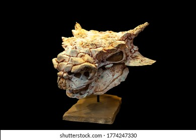 Saichania is a genus of herbivorous ankylosaurid dinosaur from the Late Cretaceous period of Mongolia and China., saichania chulsanensis, skull with mandible cast late cretaceous epoch Mongolia