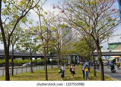 SAIGON DOWNTOWN, DISTRICT 1, HO CHI MINH CITY, VIETNAM - APRIL 2018: Unidentified people are walking under the trees and Tabebuia rosea flower are blooming