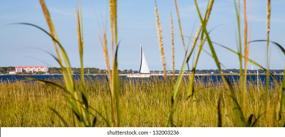 A sail boat makes its way down the cooper river as seen from the reeds. Charleston, South Carolina