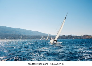 Sailboat participate in sailing regatta