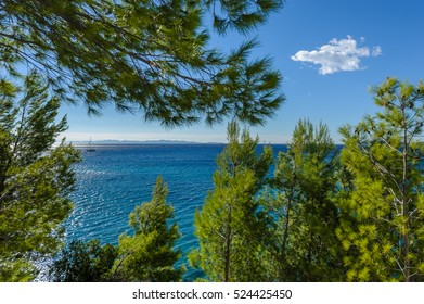Sailboat at sea with pine trees in the foreground. Cloud in the background.