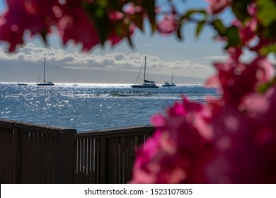 Sailboats in Lahaina harbor as seen through the flowers.