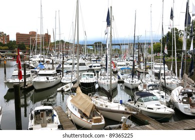 Sailboats moored tight together in a marina.