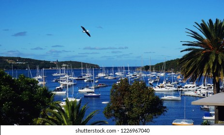 Sailboats on a bay, Spit brigde to Manly walk, Sydney, Australia, New South Wales