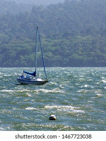 Sailboats on a windy day on Tomales Bay
