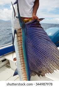 Sailfish, fishing