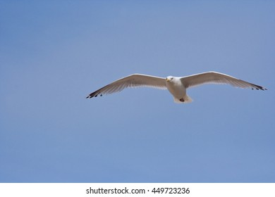 Sailing seagull against a blue sky