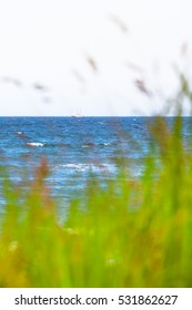Sailing ship at horizon of blue sea seen from a blurred bunch of grass at the windy shore (copy space)/View to the Sea