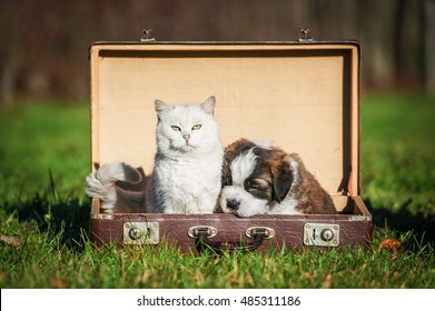 Saint bernard puppy with a cat sitting in a suitcase