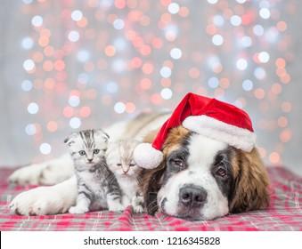 Saint Bernard puppy in red Christmas hat hugging kittens