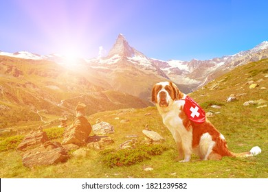 Saint Bernard rescue dog carrying first aid kit, standing in Zermatt, Canton of Valais, Switzerland, with Mount Matterhorn or Monte Cervino or Mont Cervin along the 5 Lakes trail of Sunnegga at sunset
