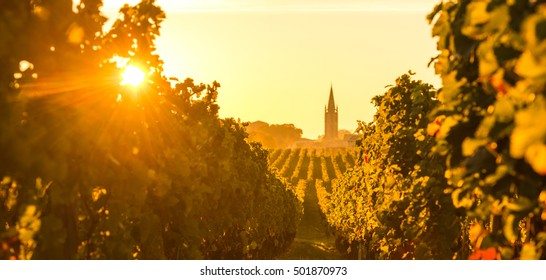 Saint Emilion, Vineyard Sunrise, Bordeaux Wine, France
