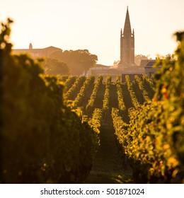 Saint Emilion, Vineyard Sunrise, Bordeaux Wine, France