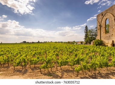 Saint émilion or saint emilion vineyards landscape.