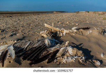 Saint George town, Delta Danube / Romania - August 15. 2014: Pelican cadaver on the coast. Natural disaster.