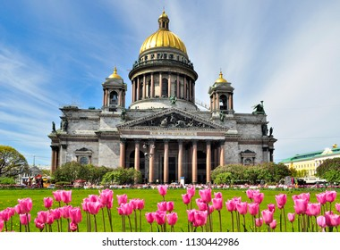 Saint Isaac's Cathedral in Saint Petersburg, Russia, seen in spring with the tulips in the foreground