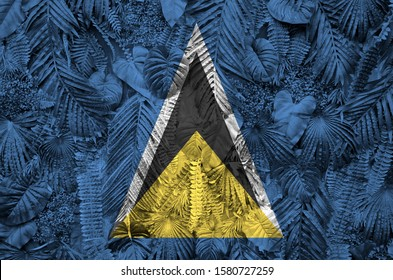 Saint Lucia flag depicted on many leafs of monstera palm trees. Trendy fashionable backdrop