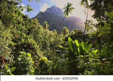 Saint Lucia paradise jungle, one of the most beautiful rainforests among Caribbean islands