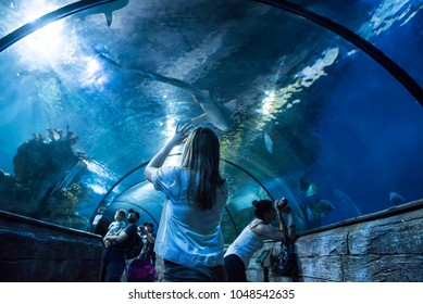Saint Paul's Bay, Malta - April 13, 2017. People watch the fish and take photos inside an aquarium at the island of Malta in the Mediterranean Sea.