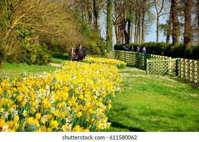 SAINT-CLOUD, FRANCE - MARCH 25, 2017: People admiring narcissus blossom at  Domaine National de Saint-Cloud park (at south-west of Paris)