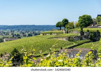 Saint-Emilion (Gironde, France), the vineyards