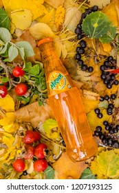 Saint-Petersburg, Russia, 17 10 2018 Mirinda in a glass tin bottle on autumn yellow green foliage of trees, spruce, cones, chestnuts, berries, wild rose, birch, linden, white with a drop of dew, rain