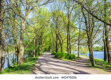 SAINT-PETERSBURG, RUSSIA - MAY 12, 2016: Alley in the park on Elagin island in spring. Eelagin Island is a unique protected natural complex in the north of St. Petersburg.