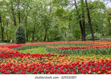 SAINT-PETERSBURG, RUSSIA - MAY 16, 2016: Flowerbed with tulips in spring Park on Elagin Island in St.-Petersburg