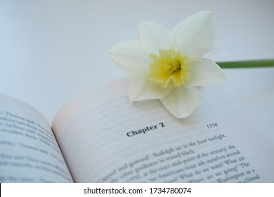 Saint-Petersburg,Russia-may 2020. An open book with new chapter and narcissus flower on it . Background / copy space .Rich man poor man , Irwin Shaw