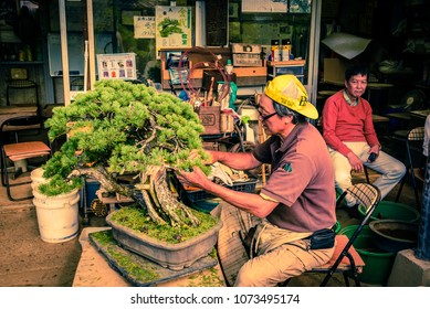 Saitama, Japan 9/30/2017 The bonsai Master at work, taking care of the bonsai trees at Omiya Bonsai Village