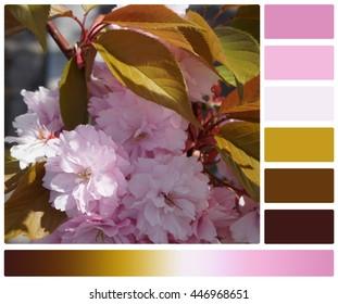 Japanese Color Scheme Images Stock Photos Vectors Shutterstock
